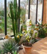 Plantes vertes pour veranda non chauffée | veranda confort france