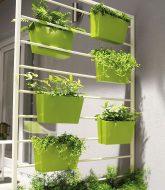 Comment realiser une veranda en bois : quelle plante dans veranda non chauffee