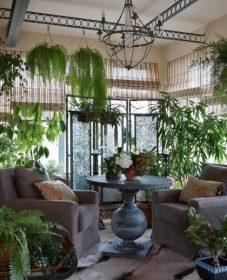 Plantes De Veranda Non Chauffee Et Veranda Bureau