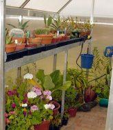 Plantes de veranda non chauffee, veranda area bayonne