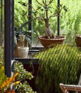 Plante fleurie veranda et conseil pour veranda